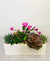 Spring Succulent Indoor Planter