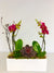 Ruby Red Sweet Orchid Planter