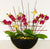 Flaming Red Orchid Planter
