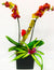 Tweety Bird Orchid Planted Container