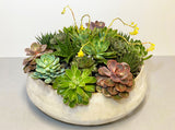 Succulent Happy Indoor Planter