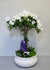 The Amazing White Azalea Indoor Planter