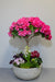 The Ultimate Pink Azalea Indoor Planter