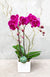 Fuchsia Pink Orchid Planted Container