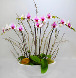 Luxury Spring Orchid Plant