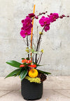Autumn Jewell Orchid Planter