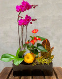 Festive Thanksgiving Orchid Planted Container