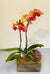 Rustic Tangerine Orchid Planted Container