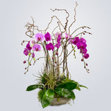 Lush Pink Orchids Planted Container