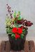Impatiens Outdoor Planter