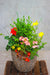 Bright & Cheerful Outdoor Planter