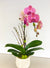 Velvety Pink Orchid Planted Container
