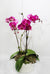 Hot Pink Orchid Planter