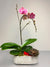 Dusty Rose Orchid Planter