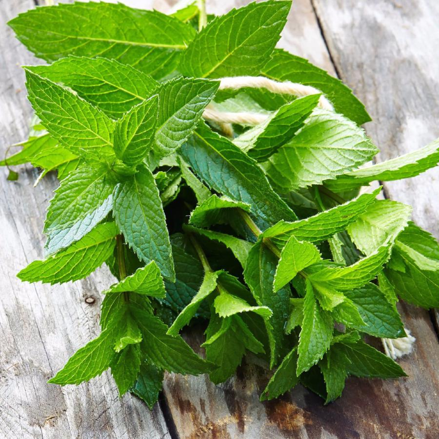 Essential Oil-Organic Mana Mint French Peppermint 1oz - Aloha Voyager of Maui