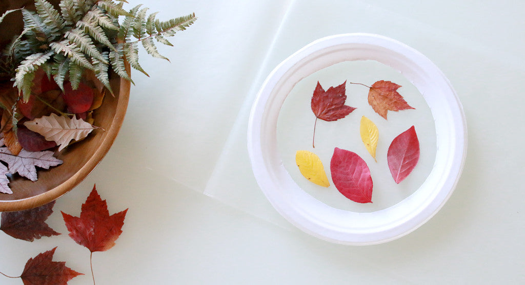 How to Make Leaf Suncatchers