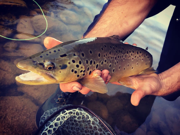 Excellent fly fishing in Telluride