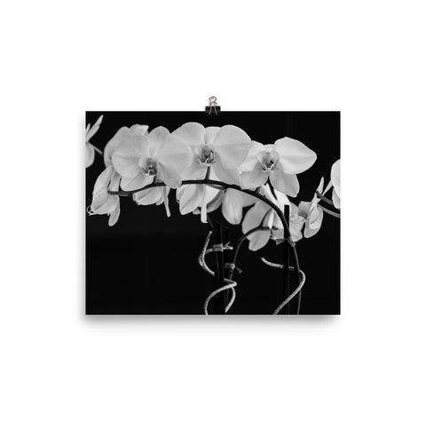Black and White Orchid Poster - Photography