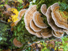 5 Functional Mushrooms Offering Benefits Supported by Science