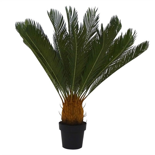 Cycad in Pot