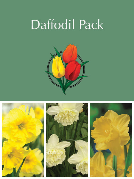 Mother's Day - Daffodil Gift Pack