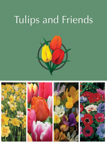 Mother's Day - Tulips and Friends Gift Pack