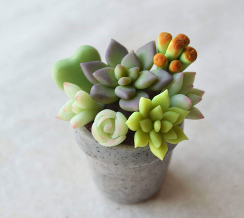 Polymer Clay miniature Succulent Granite Pot House Plant Magnet