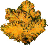 Vegan Cheeze Kale Chips