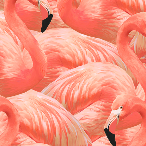 Flamingos — Limited Edition
