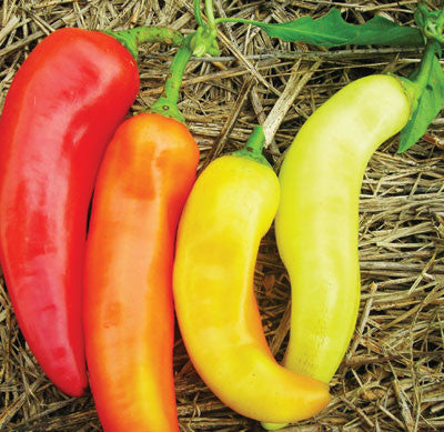 Red Cherry (Cherry Sweet) PEPPER, FRYING .5g seed, USDA Certifie