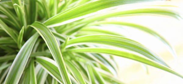 4 HOUSEPLANTS FOR CLEAN AIR & ENHANCED HEALTH