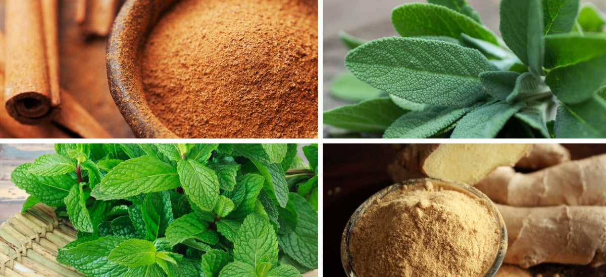 6 HEALING HERBS AND SPICES & THEIR HEALTH BENEFITS