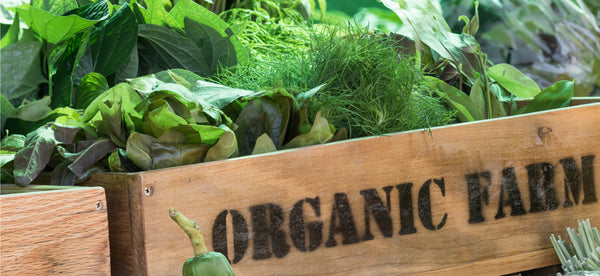 THE BENEFITS OF SWITCHING TO ORGANIC FOOD