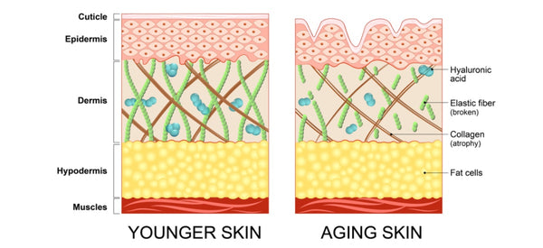 WANT FIRM SMOOTH SKIN? HERE'S WHY COLLAGEN IS SO IMPORTANT FOR HEALTHY SKIN