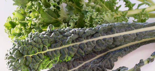 REAP THE HEALTH BENEFITS OF KALE, THE LEADING LEAFY GREEN SUPERFOOD