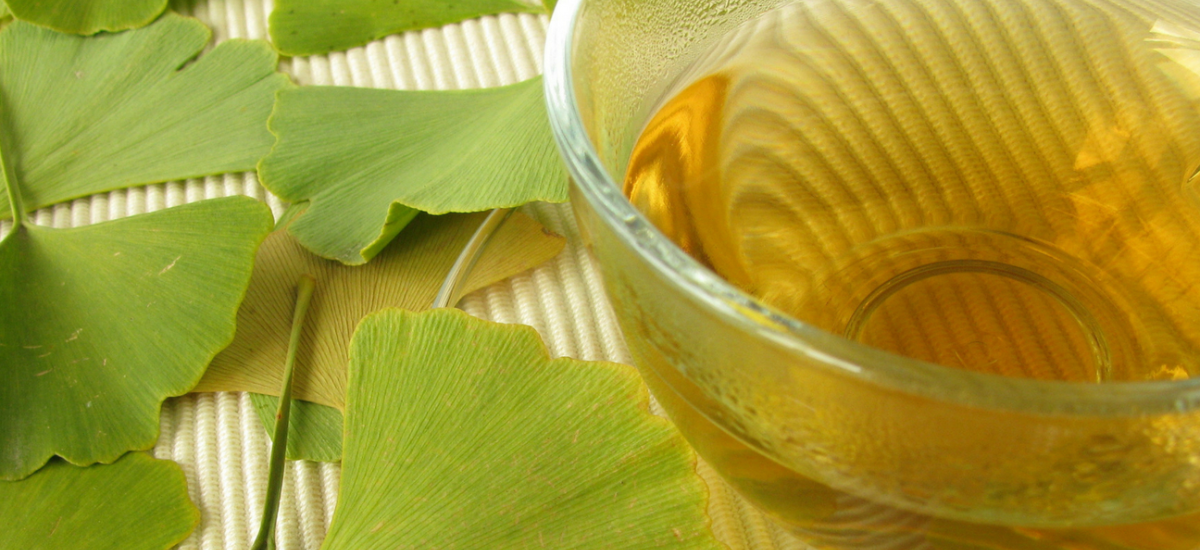 10 HEALTH & WELLNESS BENEFITS OF GINGKO