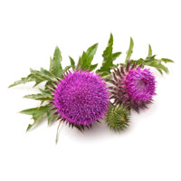 Lipolami Milk Thistle