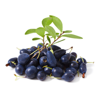 Sexual benefits of bilberry for men