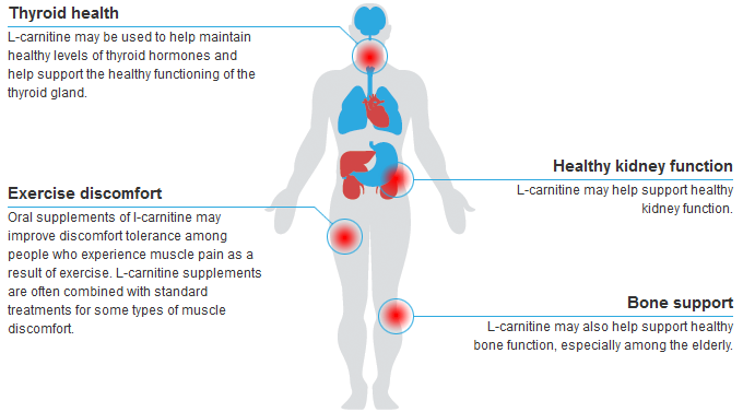 L Carnitine May Also Help Support Healthy Bone Function Especially Among The Elderly