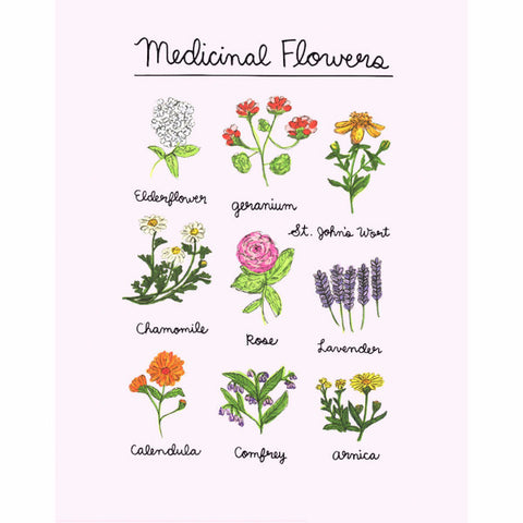 hand drawn medicinal flowers art print
