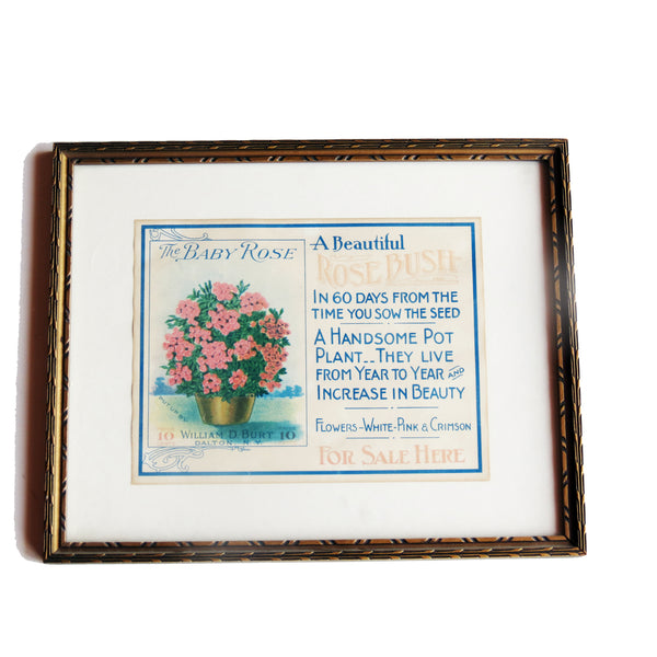 "Vintage William Burt ""Rose Bush"" advertisement, framed (c 1910) - Selective Salvage"