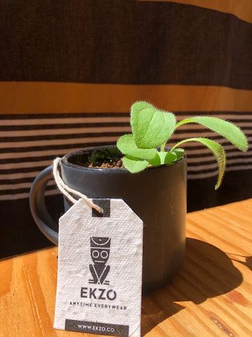 White tag in front of green plant growing out of black coffee cup