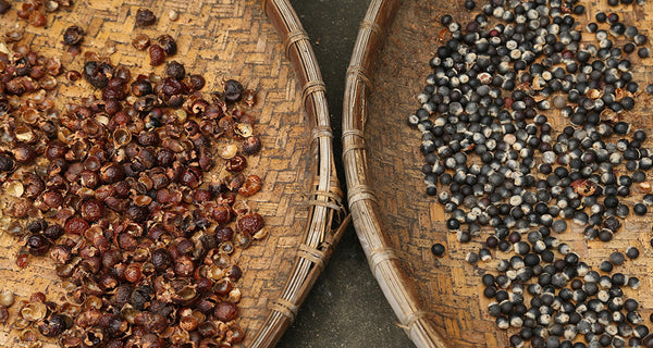 The Origin of the Soapberry