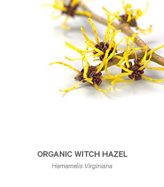 image-Organic_Witch-Hazel