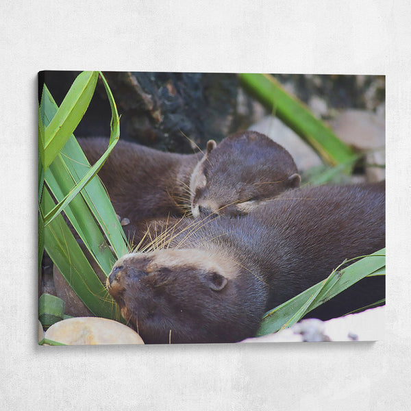 River Otter Friends