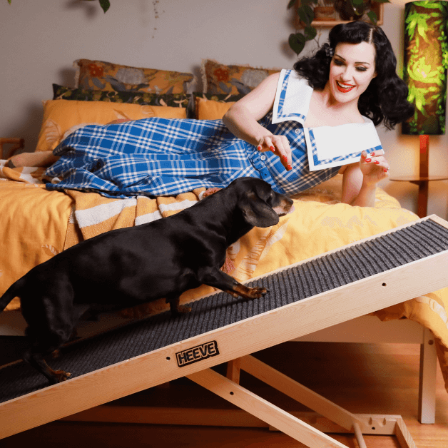 A black small dog walking up a wooden dog ramp beside a bed towards a lady giving some dog treats