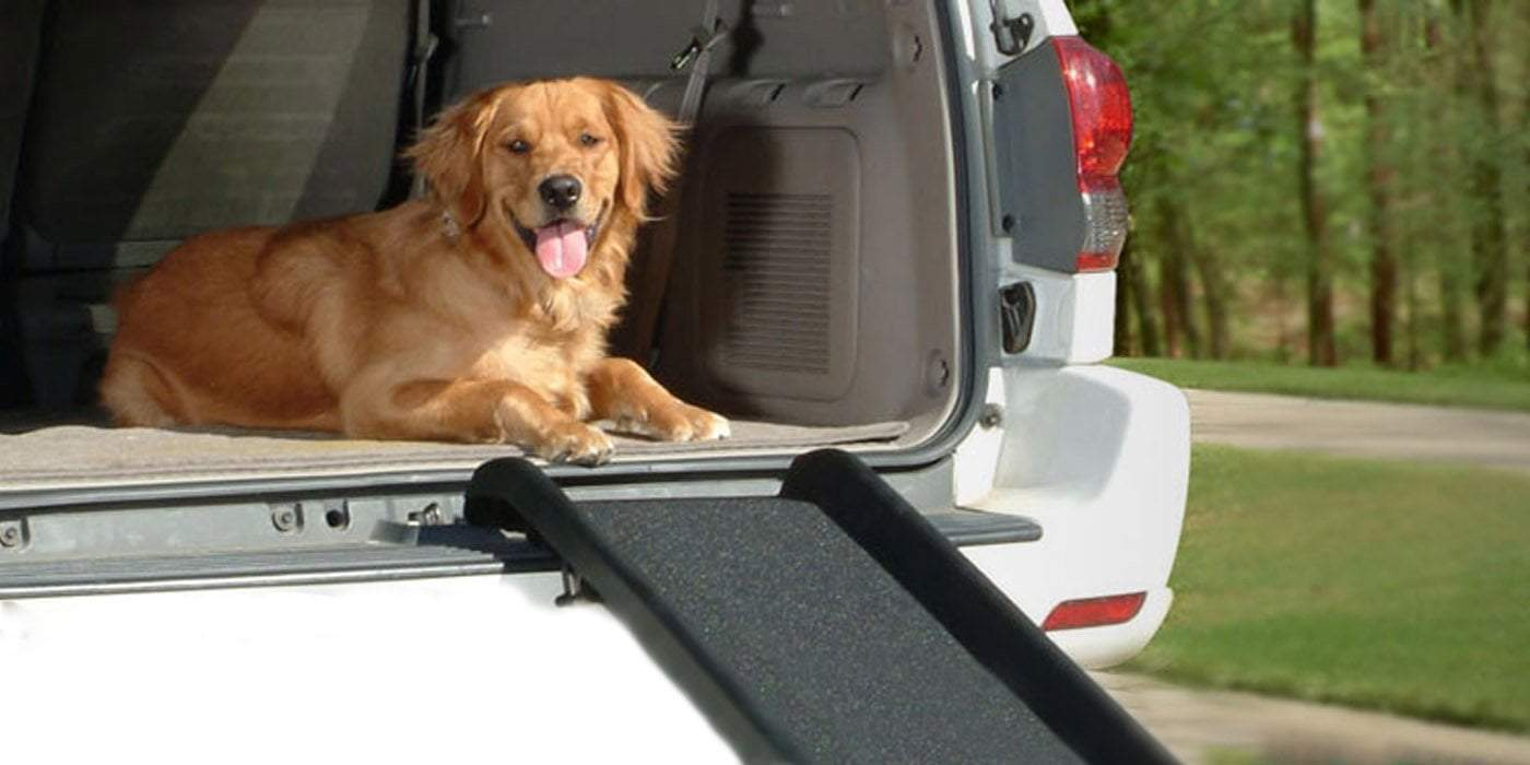 brown dog sitting on open car trunk