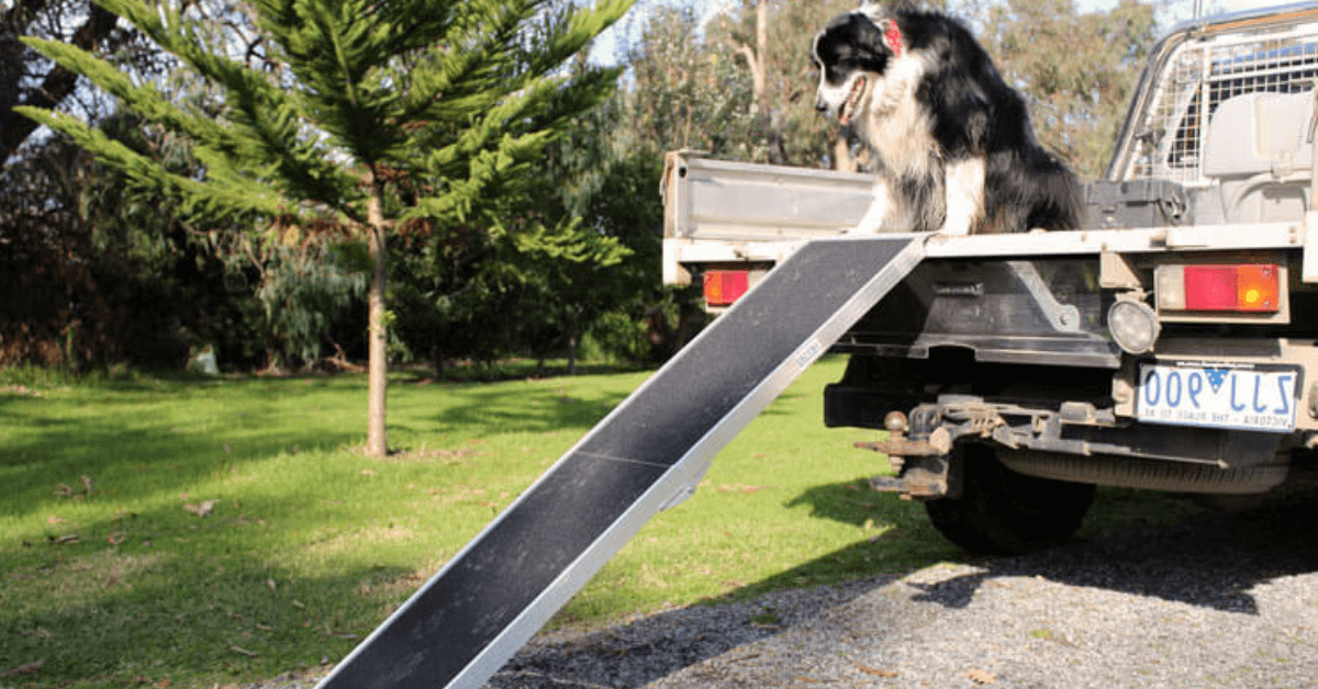 a dog at the back of a ute with a ramp