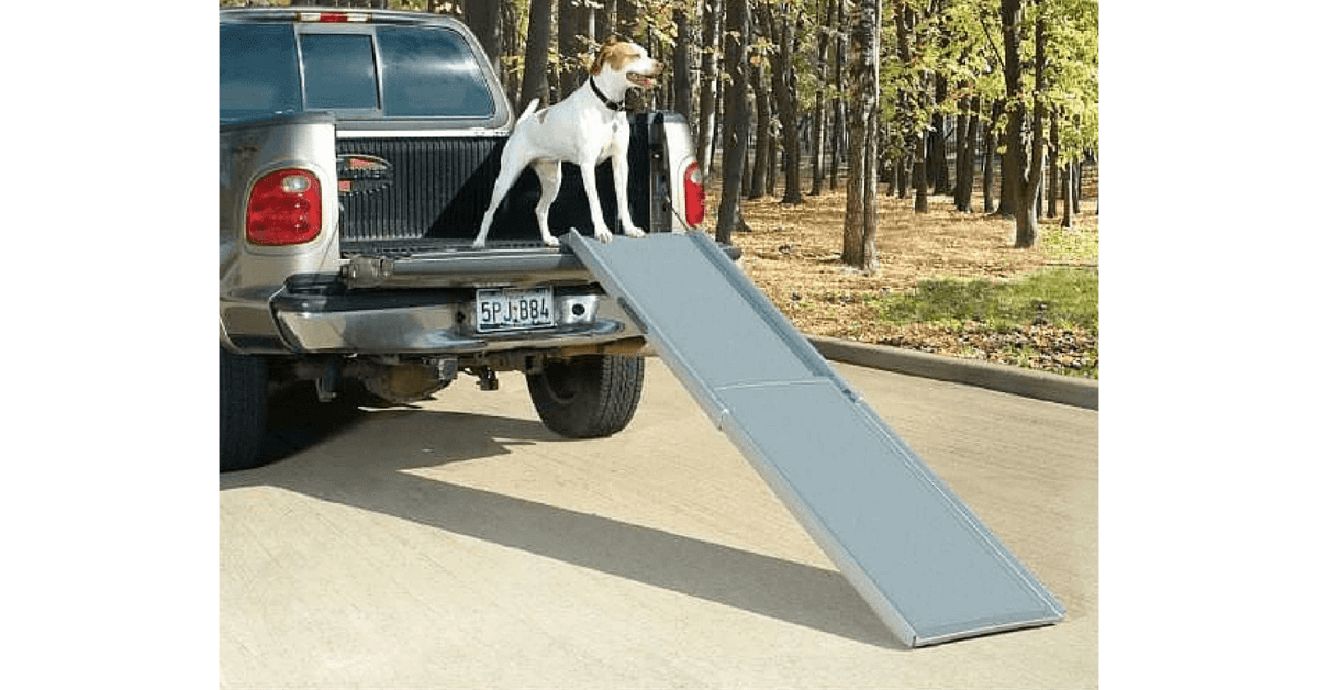White dog standing on a ute trunk with a PetSafe® Deluxe Extra Large Telescoping Pet Ramp