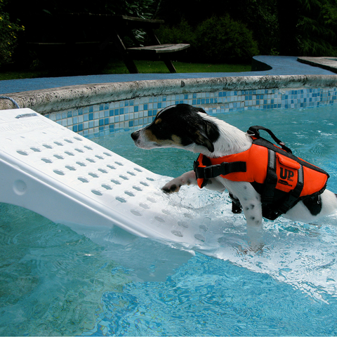 scamper ramp pool ramp for dogs